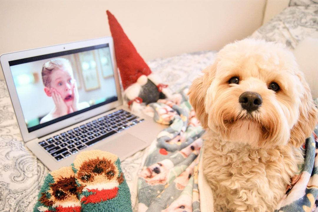 Dog Christmas Movie Marathon