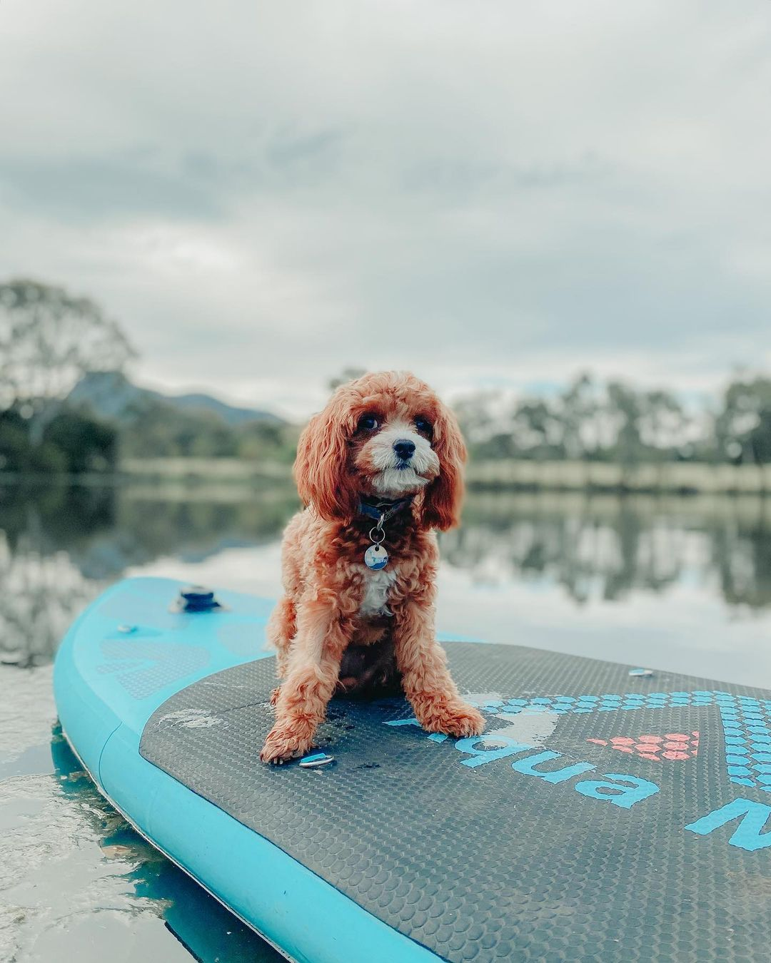 Paddle boarding for beginners at Dunkeld