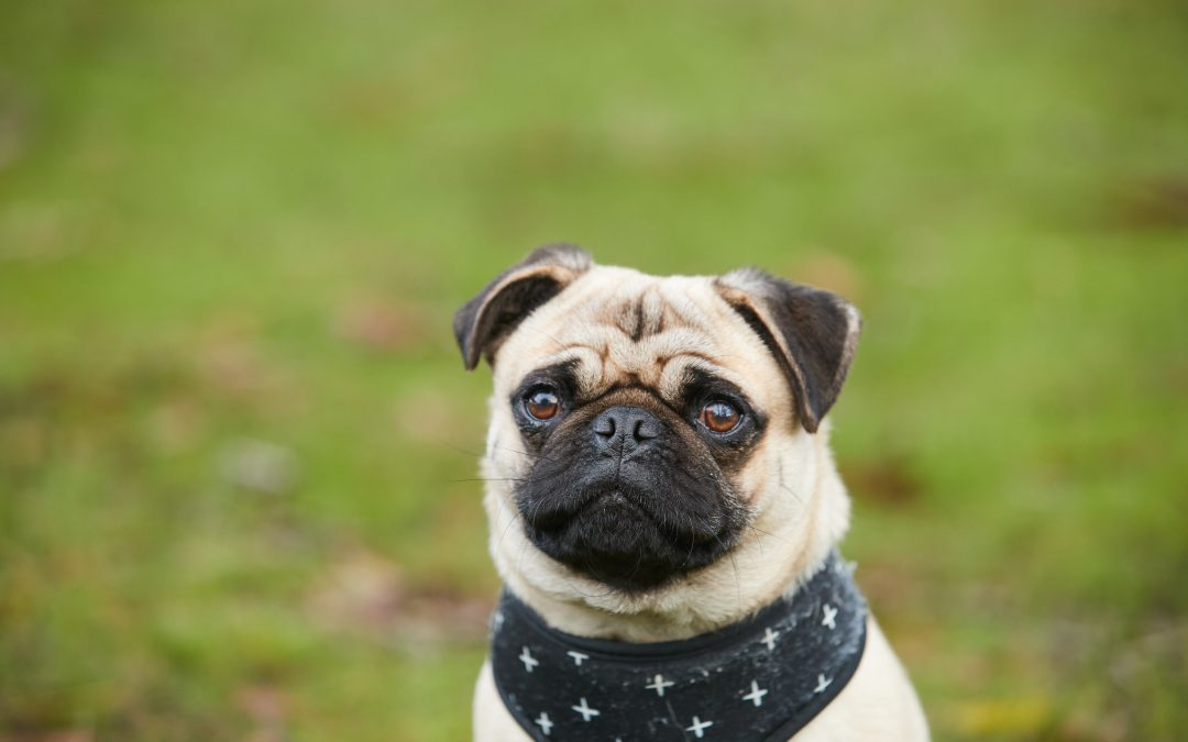 5 Of The Best Pads For Your Pooch